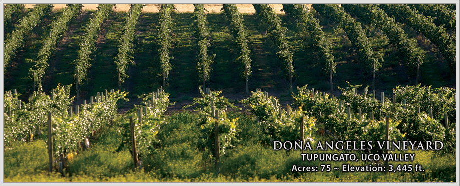 Doña Angeles Vineyard